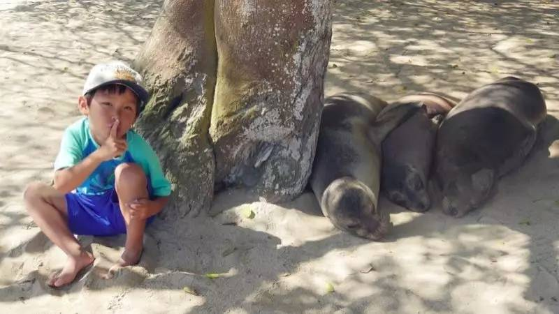 a young boy next to a tree with seals