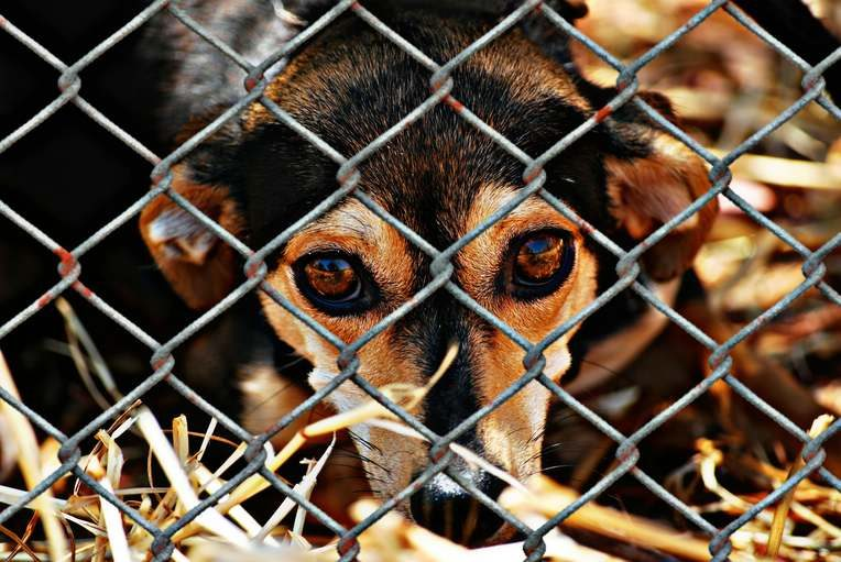 close up of a dog's face behind a cage wiring