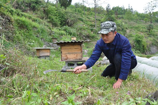 a man beekeeping in china