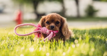 dog in the grass with rope