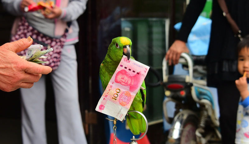front view of parrot holding 100rmb bank note