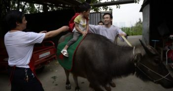 father taking son to school on an ox