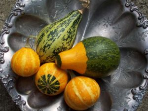 A selection of Gourds freshly harvested of green and yellow colour