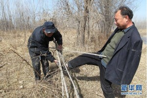 elderly blind man and double amputee plating a tree in hebei province