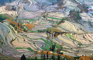 A scenic picture of yunnan rice fields from above