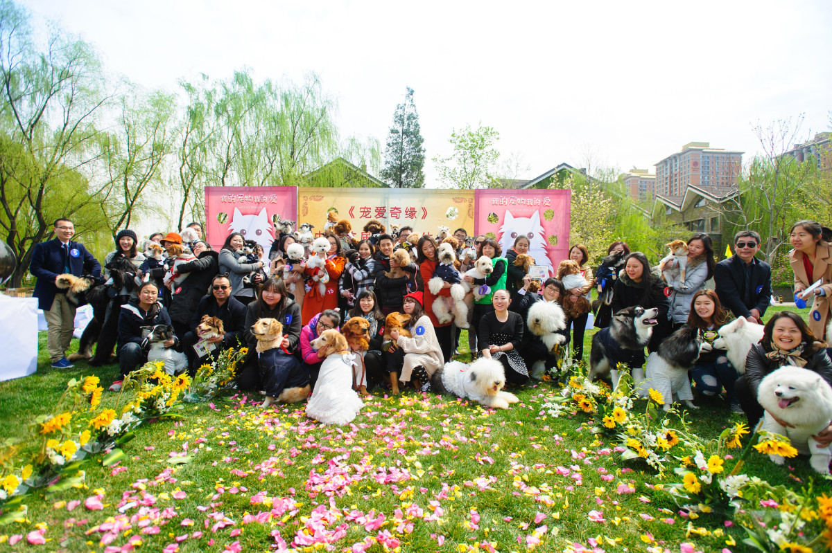 group photo of dogs and their owners at dog wedding ceremony
