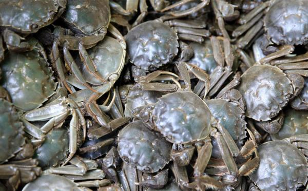 top view of a pile of river crabs