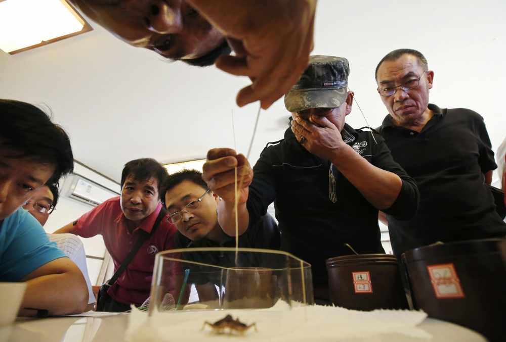 group of people crowd round a table to inspect a cricket in a container