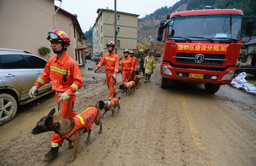 rescue team leading rescue dogs at scene of a landslide