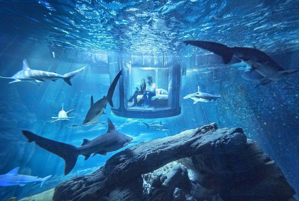 underwater view of an underwater bedroom surrounded by sharks