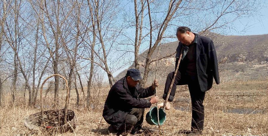 two disabled men working together to plant a tree