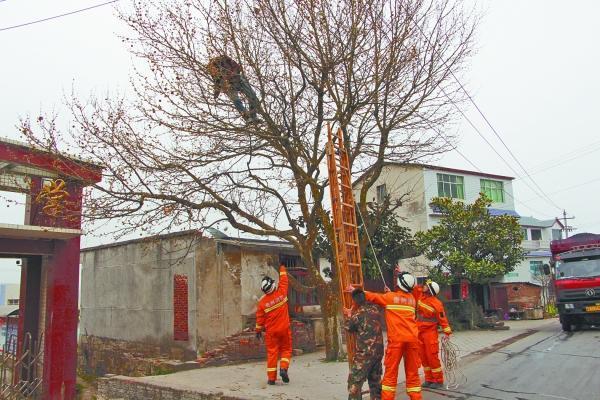 firemen raising a ladder to help a man asleep in a tree