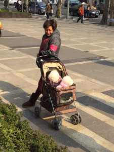 An elderly Chinese lady pushing two dogs in a pushchair