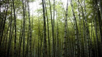 Good News for Green! China Pledges To Have 25% Forest Coverage by 2020