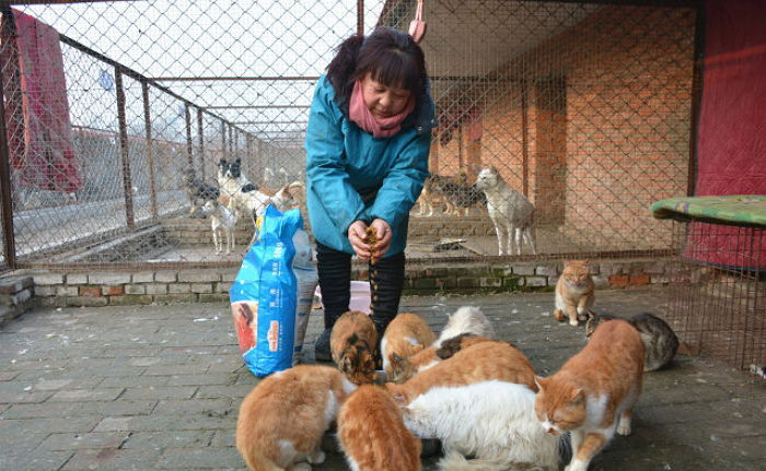 a woman feeding cats in china