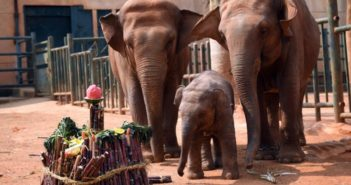 elephant family eating in yunnan