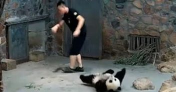 zookeeper and panda in china