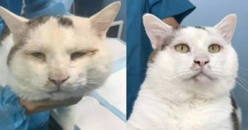 cat before and after double eyelid surgery in china