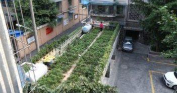 rooftop vegetable garden in chengdu