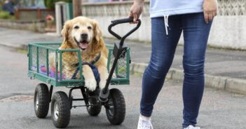 dog being drawn in a cart