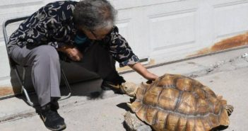 woman with her large pet tortoise in china