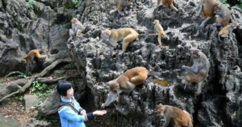 old lady with monkeys in china