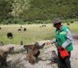man feeding monkeys in tibet