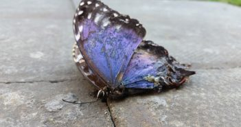dead butterfly on the ground