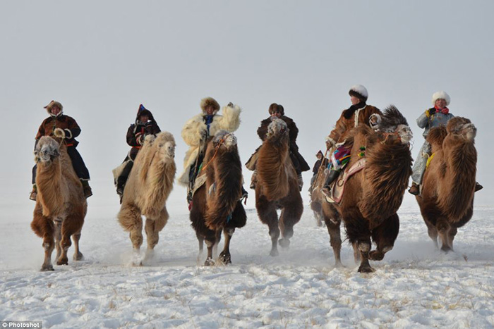 people riding camels in inner mongolia
