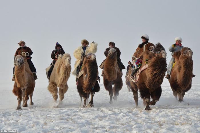 内蒙古举行赛骆驼