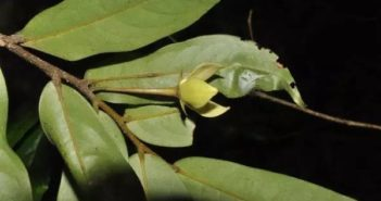 new plant species discovered in yunnan