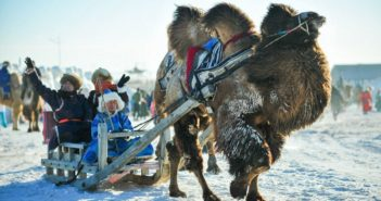 camel pulling a sleigh