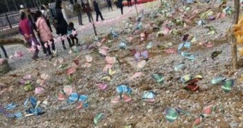 fake butterfly exhibition in china