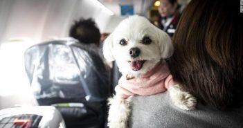 dog on owners shoulder on a flight