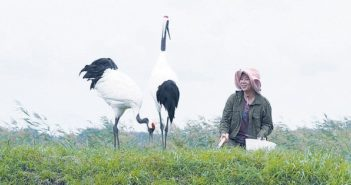 woman with two red-crowned cranes in wetlands in china