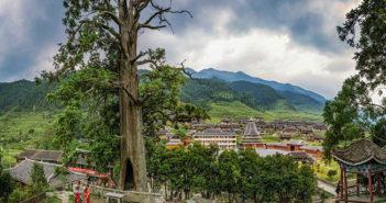old cedar tree in hunan province