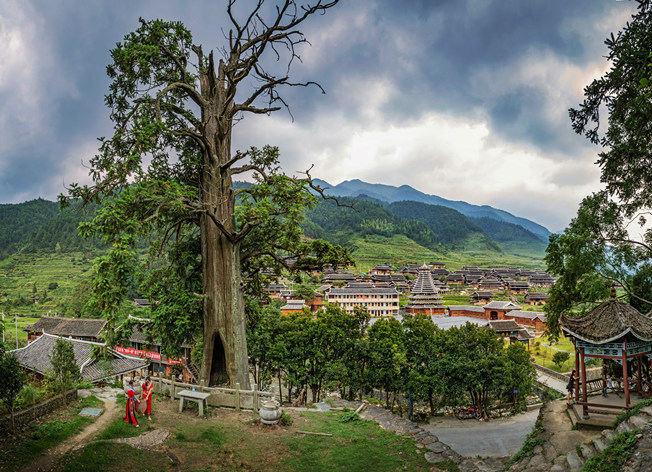 """湖南1600岁杉树被评为""""湖南树王"""""""