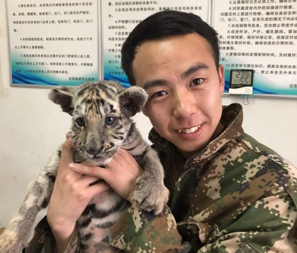 keeper with tiger cub in china