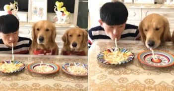 man and dogs eating noodles in china