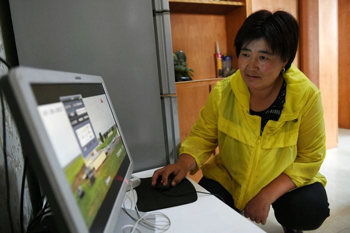 woman using computer to monitor herd in inner mongolia