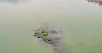 stones on yangtze river bed