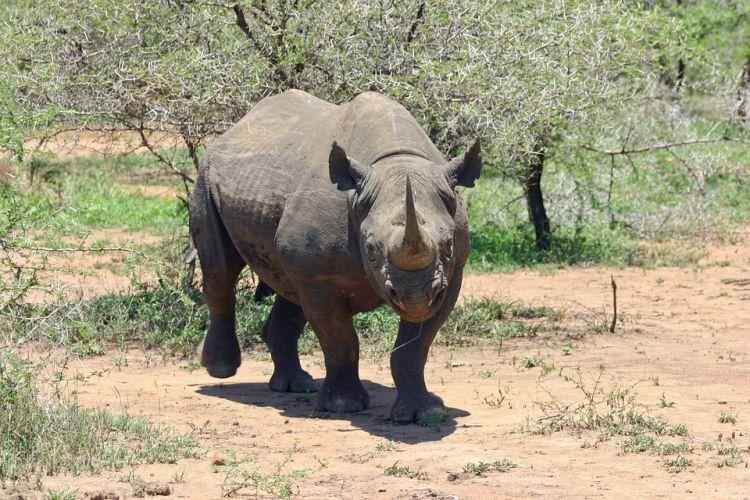 WWF公布19种极度濒危动物名单