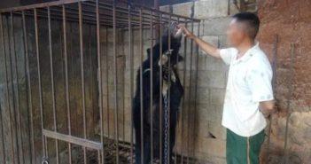 man feeding black bear milk in china