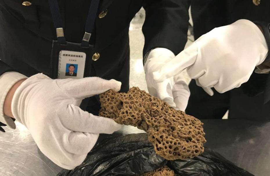 customs officers with parts of an ant colony discovered in a passengers bag