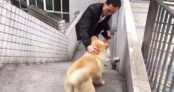 dog and owner at train station in china