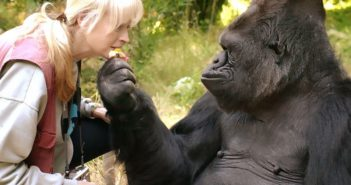 keke the gorilla with zookeeper