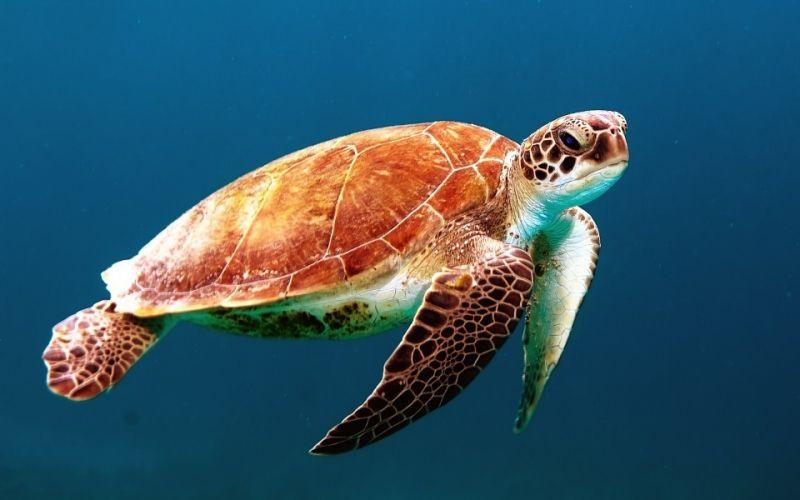中国海龟保护联盟于三亚成立