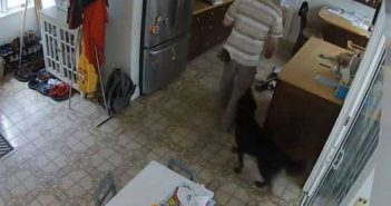 back view of dog next to a thief in a home