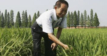 yuan longping in a rice crop