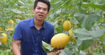man in an orchard with hami melons in china